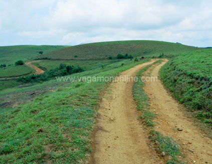 Tea plantation vagamon