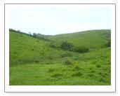 vagamon medows
